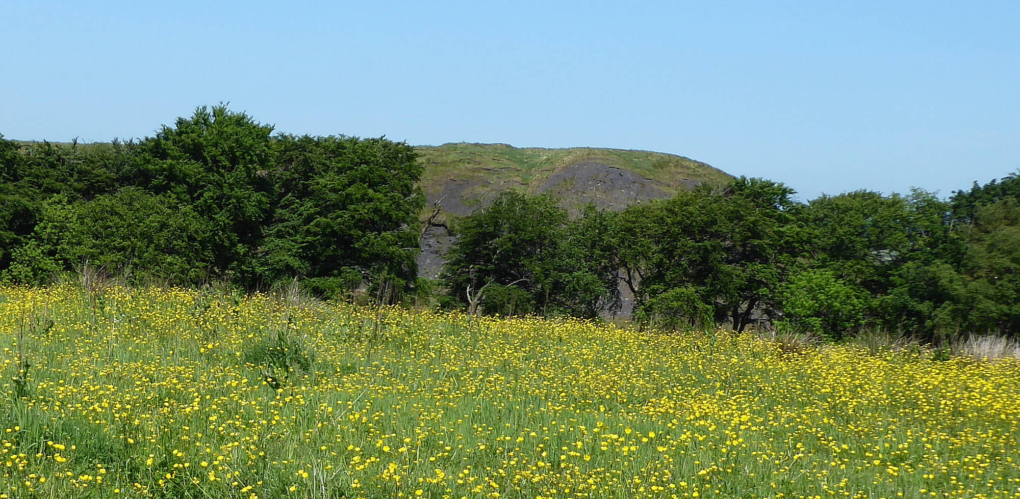 View of buttercup field with Bellfield Bing in the background (taken from Bellfield Road). 5th June 2018.