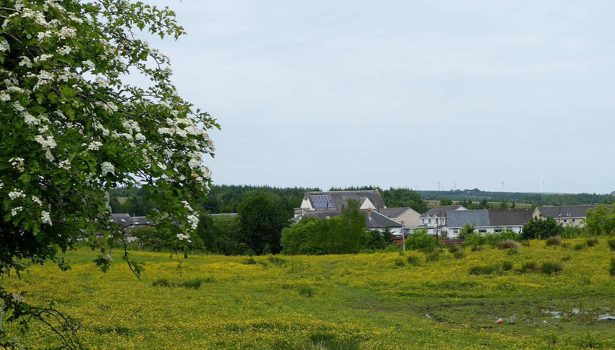 View from path of Miners' Welfare Building across buttercup field. 8th June 2018