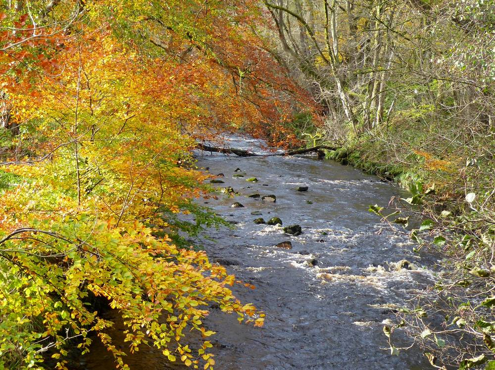 River Nethan near Watermeetings. Photo taken from footbridge over river.