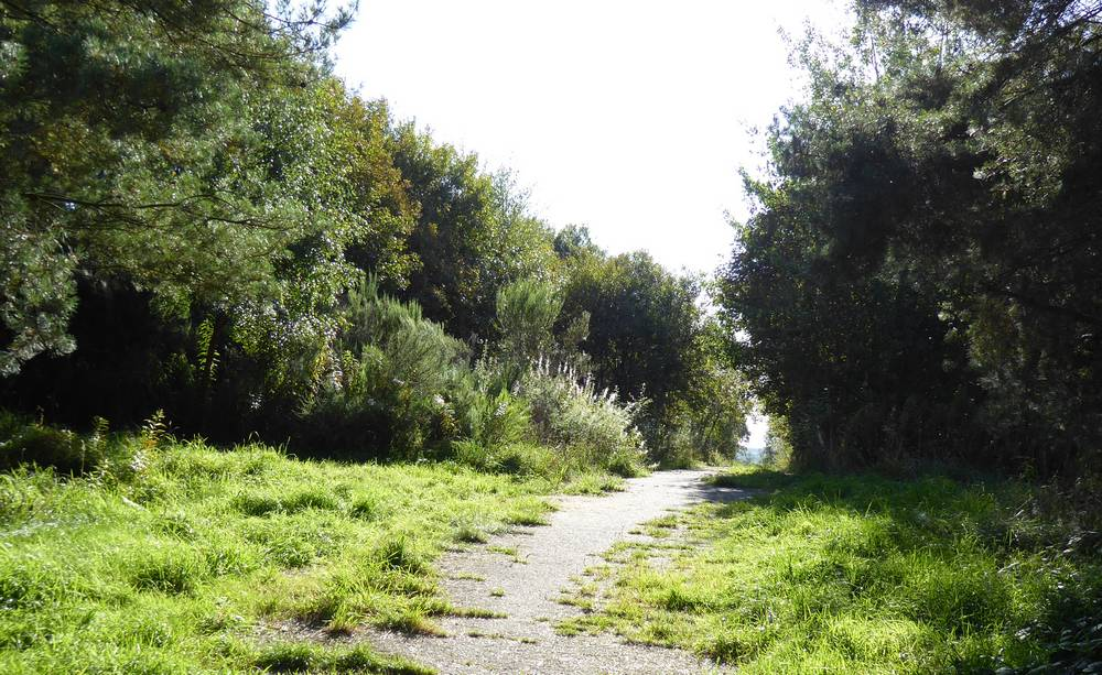 Access path to Nature Reserve.