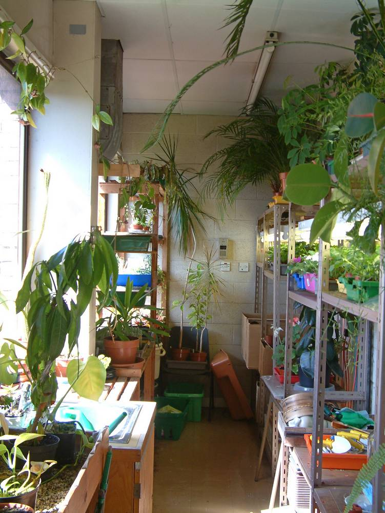 'Greenhouse' in Biology Department